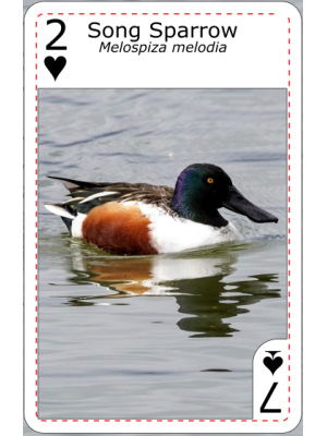 Playing cards design 6